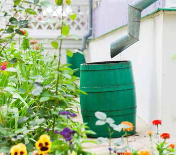 Harvesting Rainwater